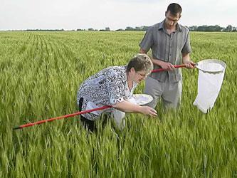мониторинг сельскохозяйственных угодий