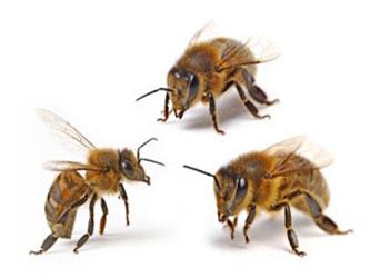 нозематоз пчел, профилактика, лечение