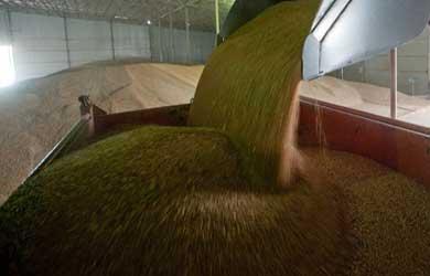 отгрузка зерна