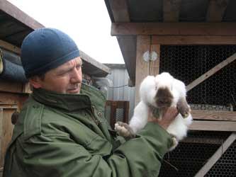 кролиководство на Кубани