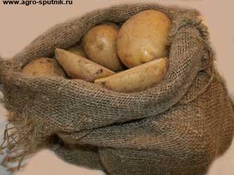 новый сорт картофеля