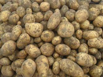 урожая картофеля