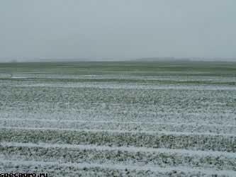 необычно холодной погоды в Ставропольском крае