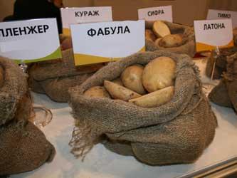 импорт картофеля в Россию