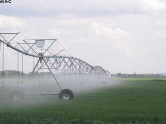 Агрокомплекс «Прикубанский»: прибыльное овощеводство
