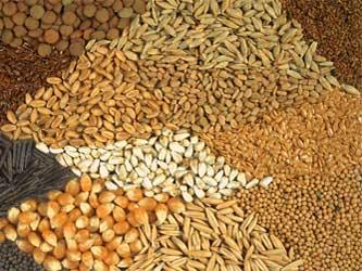 зерно разных видов