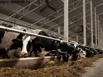 Государственная поддержка молочного животноводства