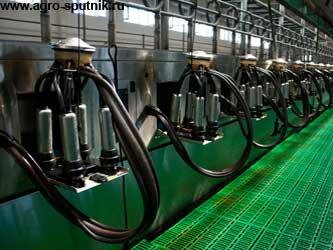 производство молока в России
