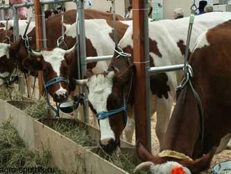 животноводство Кубани