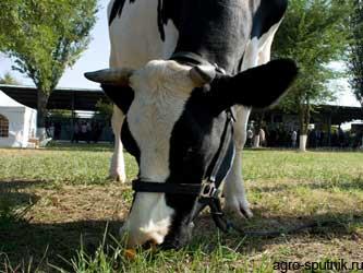 диагностика инфекционной патолигии у животных