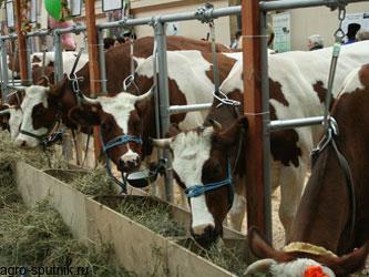 поддержка животноводческой отрасли